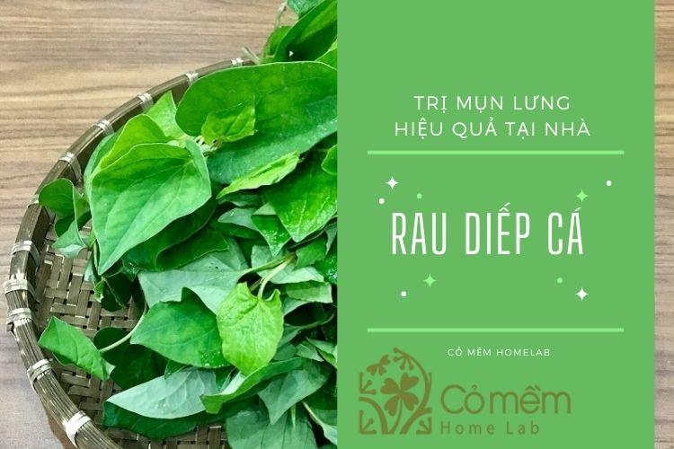 7 công thức trị mụn lưng từ rau diếp cá (có hướng dẫn cụ thể)